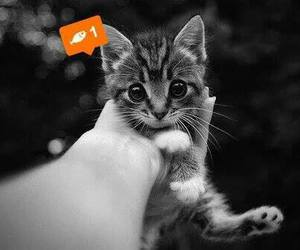 cat, fish, and tags image