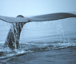 ocean, tail, and water image