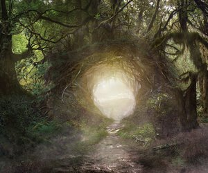 forest, magical, and trees image