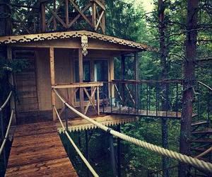 forest and tree house image