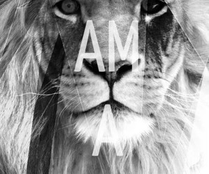 lion, black and white, and conqueror image