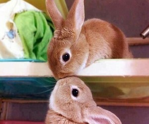 animals, bunnies, and kissing image