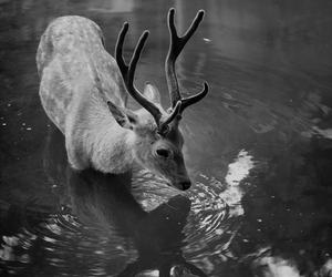 animal, deer, and water image