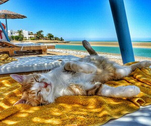 cat and beach image
