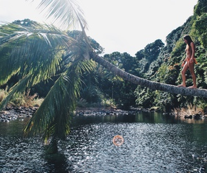 nature, photography, and palm tree image