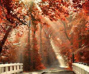 bridge, fall, and forest image
