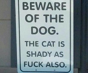cat, dog, and sign image
