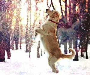 dog, galaxy, and snow image