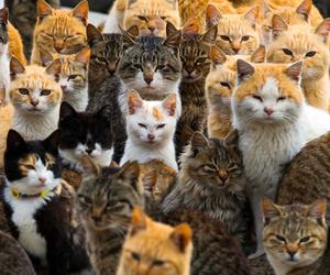 animals, felines, and cats image