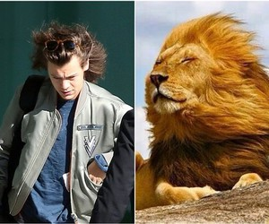 Harry Styles, hair, and lion image