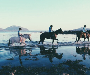 awesome, beach, and fjord image