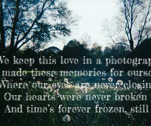 heart, nature, and photograph image