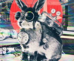 rabbit and vintage image