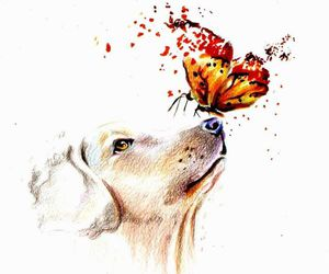 dog, butterfly, and drawing image