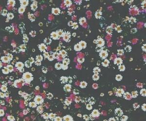 band, daisy, and dark image
