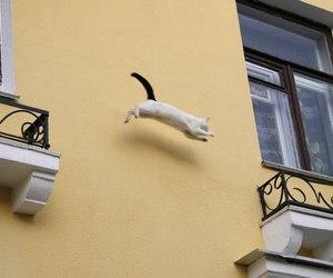 cat, yellow, and grunge image