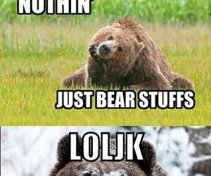 bear, cocaine, and drugs image