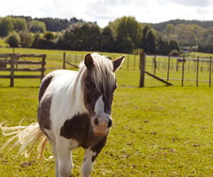 animal, gorgeous, and horse image