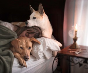 best friends, doggies, and puppies image