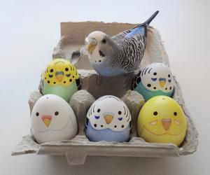 cute and bird image