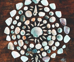 shell, summer, and beach image