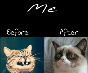 angry, bad, and cat image