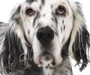 beautiful, beauty, and dog image