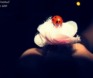 flower, ladybird, and pink image