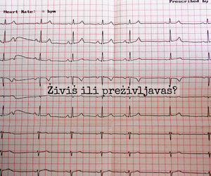 ekg, photo, and photography image