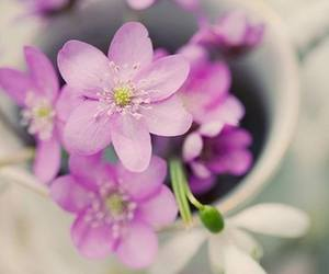 flowers and purple image