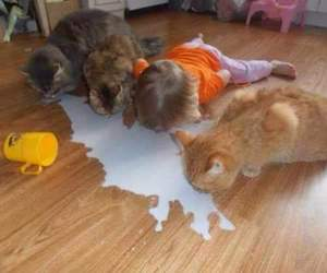 cat, milk, and baby image