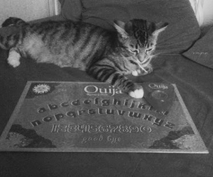 cat, game, and ouija image