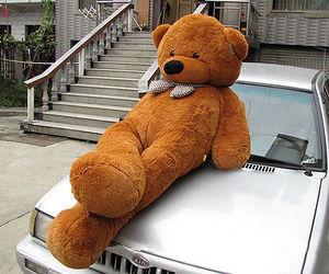 bears image