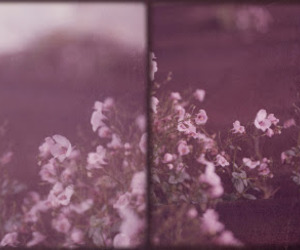 analog, flowers, and rose image