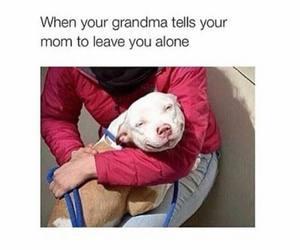 funny and grandma image