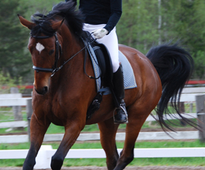 dressage, horse, and add more tags image