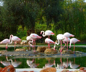 flamingo, woods, and pink image