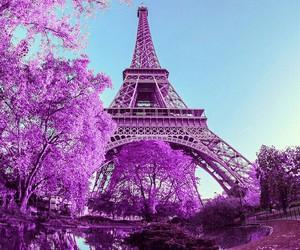 paris and purple image