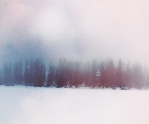 forest, snow, and fog image
