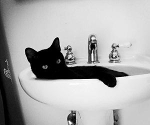 black, cat, and funny image