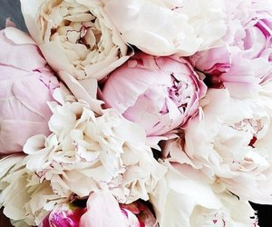 flowers, inspiration, and peonies image