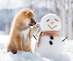 dog, snowy, and paw image