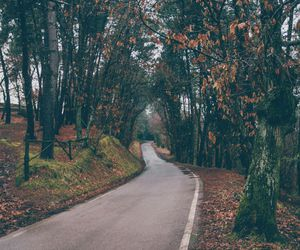 autumn, road, and leaves image