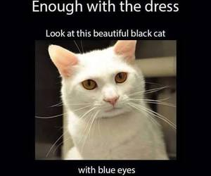 cat, dress, and funny image