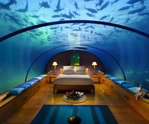 fish, sea, and room image