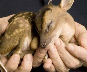 deer, bambi, and hands image