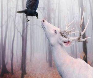 deer, animal, and crow image