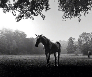 black and white, horses, and photography image