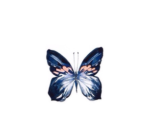 blue, butterfly, and colours image