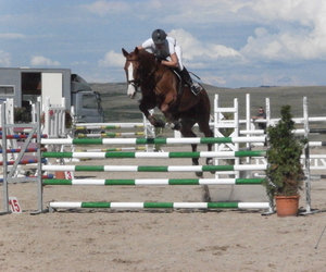 cheval, competition, and horse image
